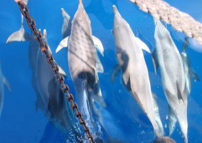 avistamiento de delfines barco de water sports los cristianos