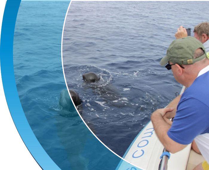 mirar y escuchar las ballenas tenerife water sports puerto colon adeje