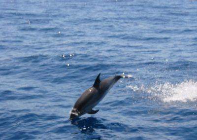ver delfines en tenerife