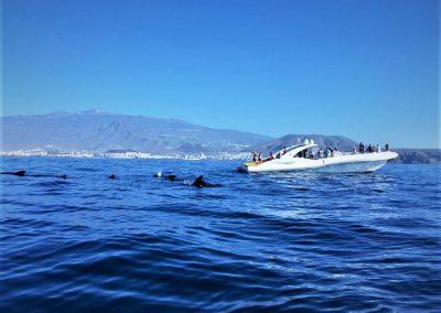 foto water sports tenerife adeje puerto colon
