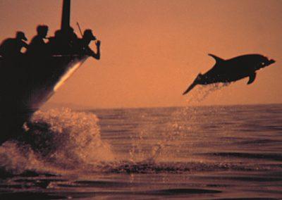 water sports tenerife puerto colon adeje 567